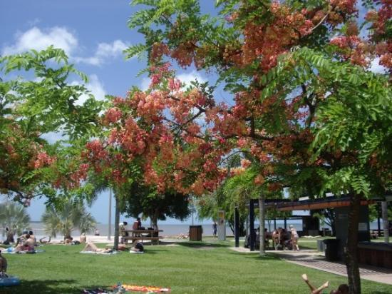 ‪Cairns Esplanade Swimming Lagoon‬ لوحة