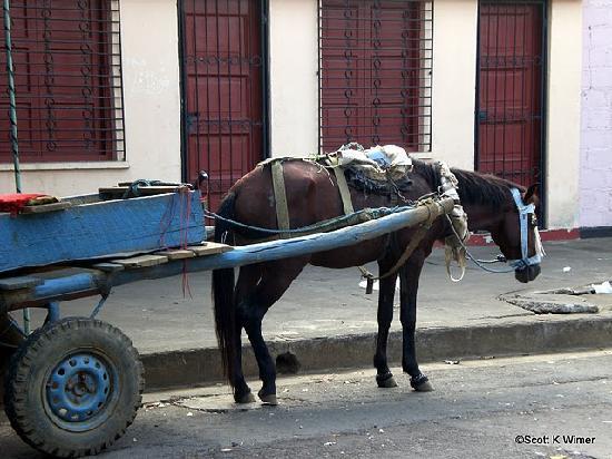 Hotel Los Cisneros: Typical horse cart