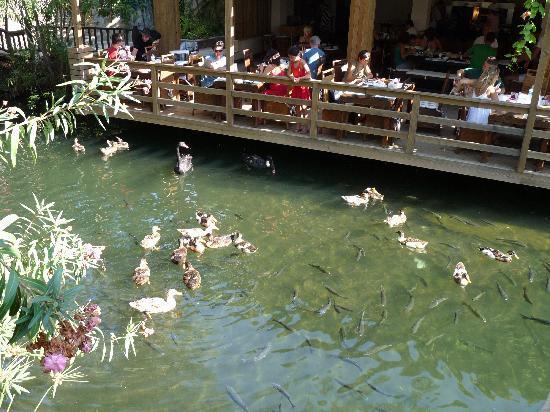 Golden Key Bordubet: The Ducks