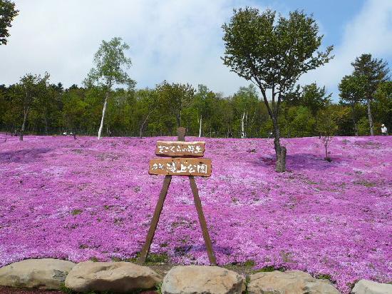 滝上町, 北海道, 芝桜公園の看板