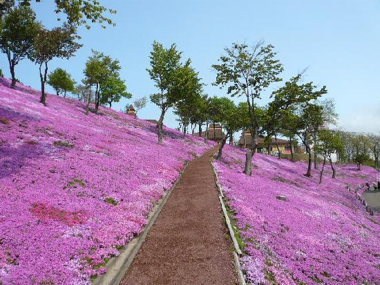 滝上町, 北海道, 広々とした公園内