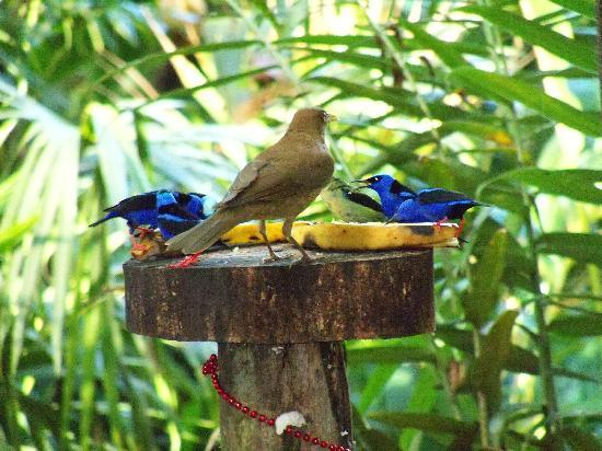 Tree Houses Hotel Costa Rica: Our breakfast buddies!