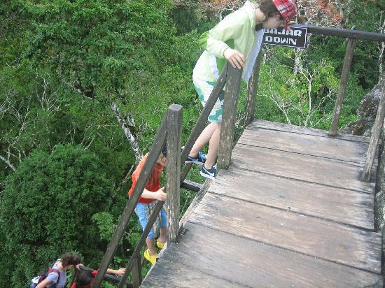 Martz Farm Treehouses and Cabanas Ltd.: Steep stairs at Tikal, Guatemala
