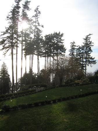 Dancing Firs Bed and Breakfast: The view