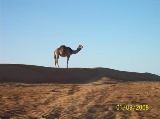 Sur, Oman: Wahabi Sands - Oman
