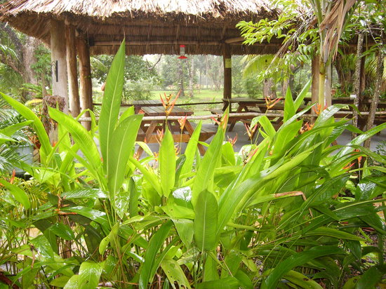 Mayan Wells resort and Gift Shop : looking at the outdoor eatery