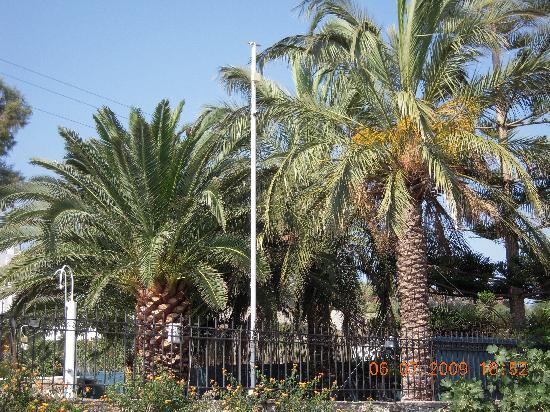 Paros Eden Park: palm trees the garden