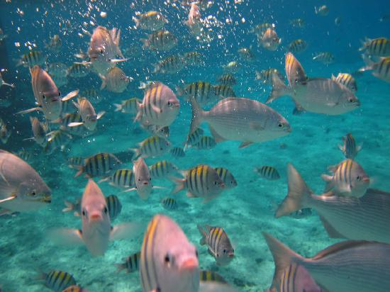Snorkeling Picture Of El Cozumeleno Beach Resort