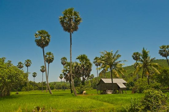 Phnom Penh, Kamboja: Natural beauty
