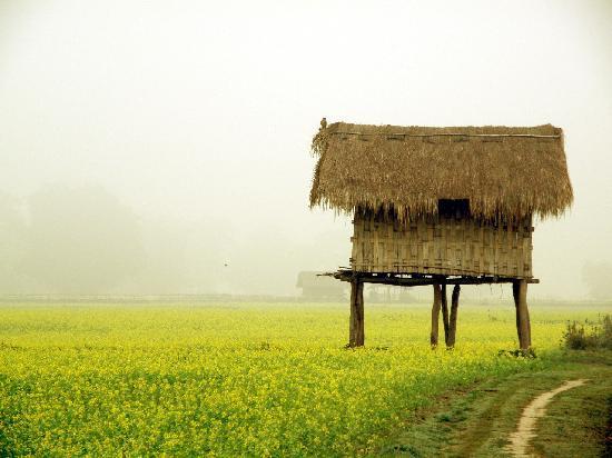 Parco nazionale di Kaziranga