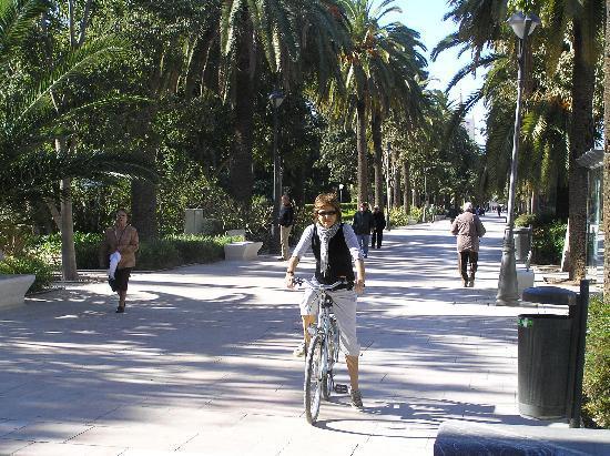 Malaga Bike Tours & Rentals by Kay Farrell: My wife enjoying the sun in December