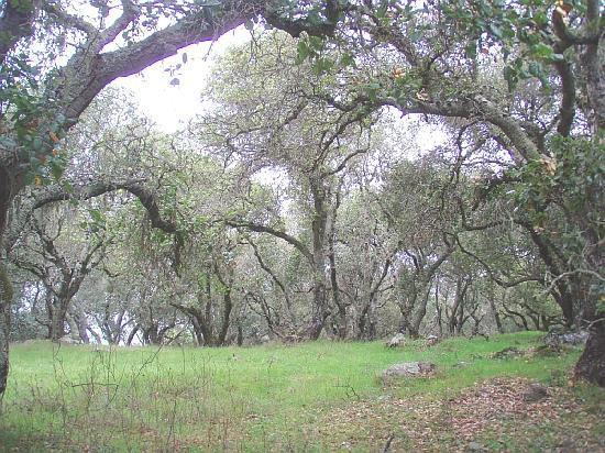 Skyline Wilderness Park : hiking through the woodlands