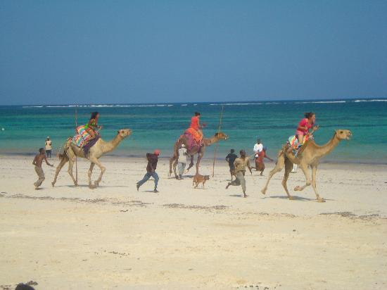 Flamboyant: Boxing Day Camel Races on the Beach