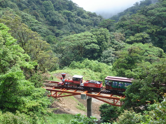Monteverde TrainForest