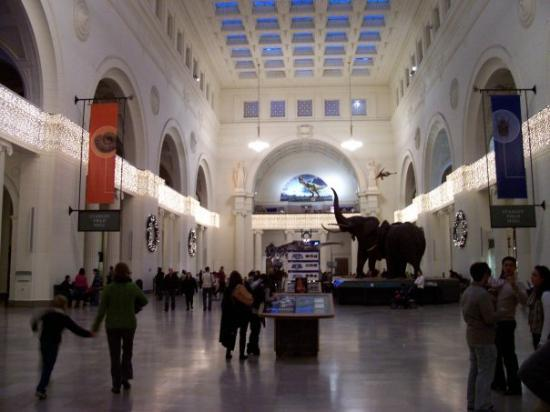 Looking up at the north facade of field museum from bottom its long field museum of natural history in chicago illinois all photos 4