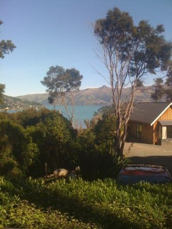 Akaroa Cottages - Heritage Boutique Collection: Akaroa Cottages, where we are staying for most of our trip. This is the view from our front wind