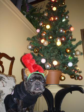The Saragossa Inn B&B: Our small dog