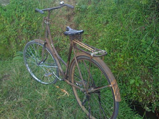 Sawah Sunrise Bed & Breakfast: Cool 'ol bike in the rice fields