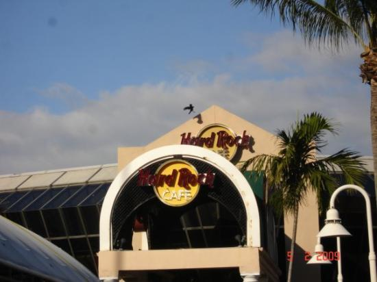 Hard Rock Cafe Miami (L)