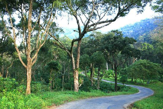 تيكادي, الهند: Aanavilasam Plantation