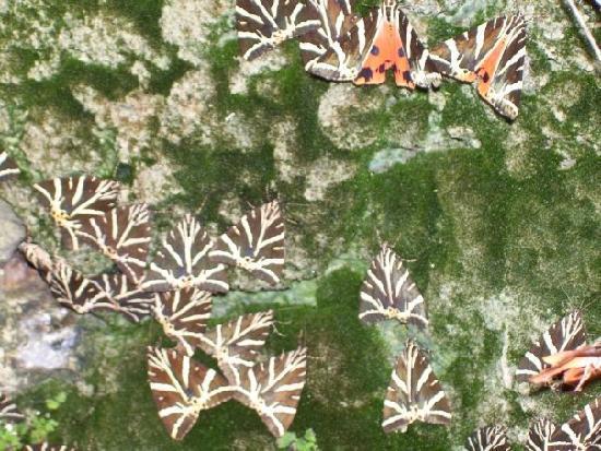 petaloudes - Picture of Valley of the Butterflies (Peta ...