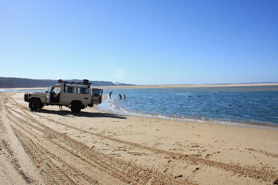 Noosa Safaris: Swimming on Rainbow Beach.