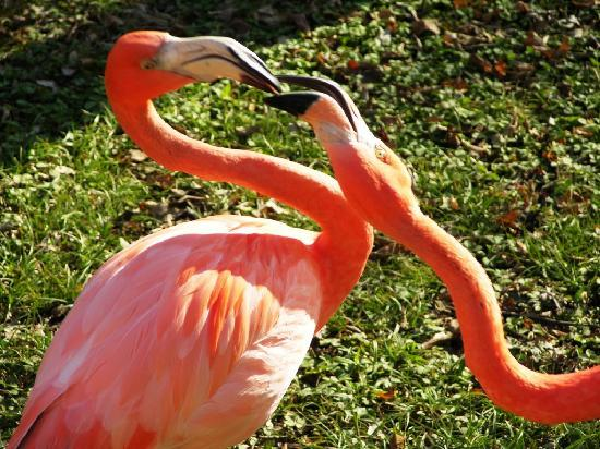 Jackson Zoo: Flamingos at the Zoo