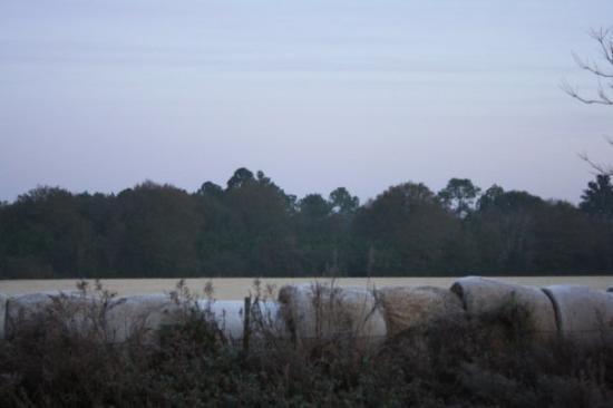 Alma, GA: Frosty hay bales
