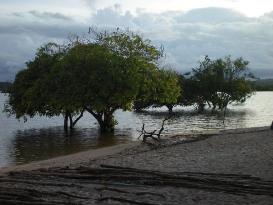 Manaos, AM: Esa playa+ una red ( amaca paraguaya) + el sonido de la selva = El mejor sueño del mundo