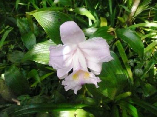 Hotel El Sapo Dorado : Orchids