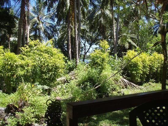 Uepi Island Resort: Lush grounds