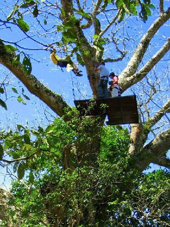 نيكاراجوا: Swinging thru the Canopy