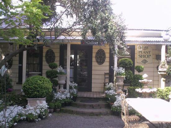Wild Roses Cafe: Shop