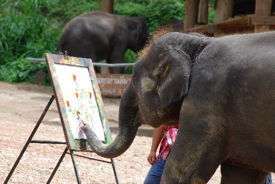 Maesa Elephant Camp 2