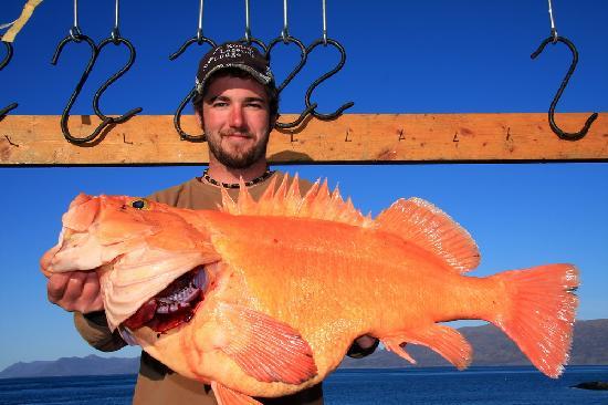 Kodiak Legends Lodge: Giant yelloweye!