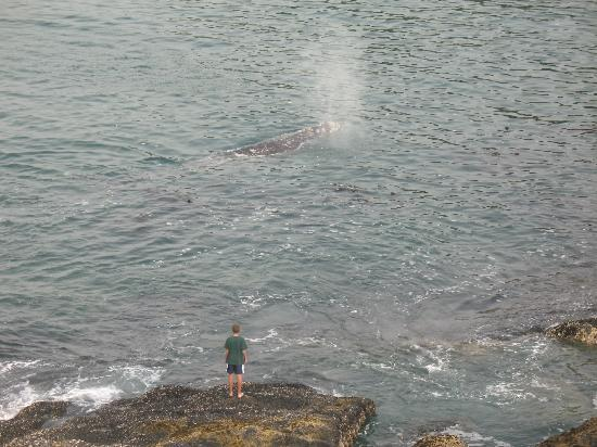 An Ocean Paradise Whales Rendezvous B&B: Whales Come Up Close To Rocks Below ~ View From Suite Windows