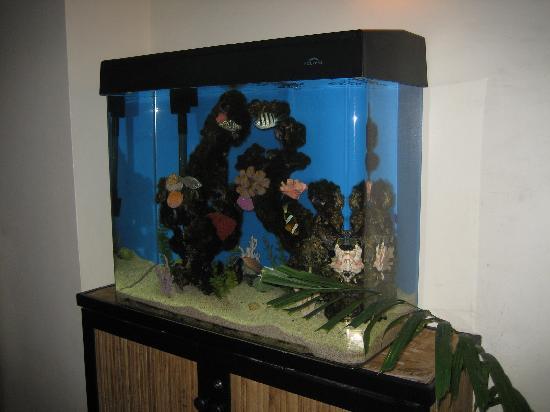 CJ's Steak & Seafood: Fish tank in lobby of CJ's