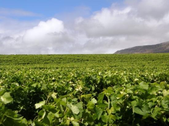 Buitenverwachting : Groot Constantia Winery
