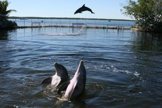 Dolphin cove key largo coupons