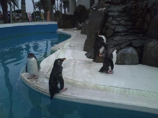 Miura, Japon : ペンギンの島