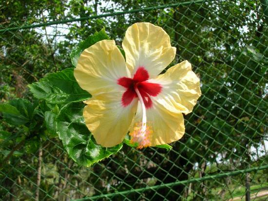 The Leela Goa : Pretty flower
