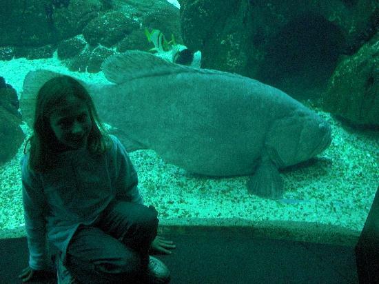 Lisbon Oceanarium : the aquarium
