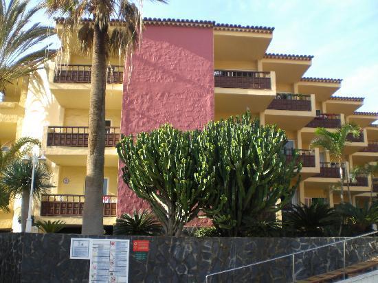 Marino Tenerife: 3