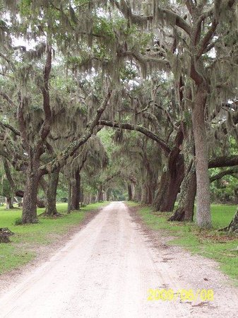 "The ""main"" road on Cumberland Island"
