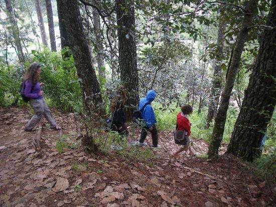 Santa Lucia Cotzumalguapa, Guatemala: Corazón del Bosque