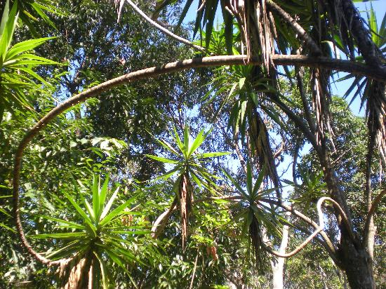Province of Alajuela, كوستاريكا: Norma's Villas landscape
