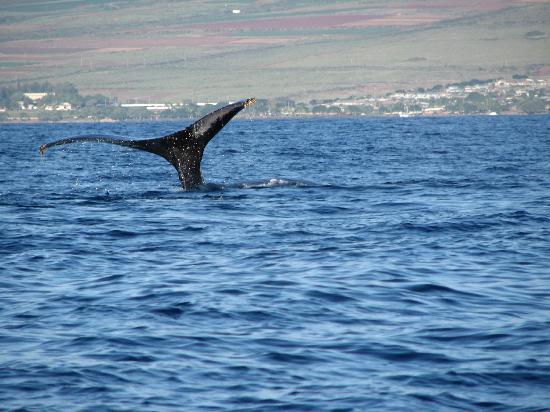 Hawaii Ocean Rafting : Tail