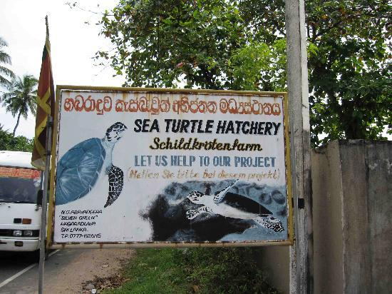 Sea Turtle Farm and Hatchery: Sign for hatchery