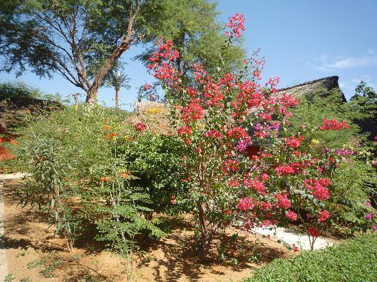 Jardin photo de lookea royal baobab la somone tripadvisor for Baobab jardin