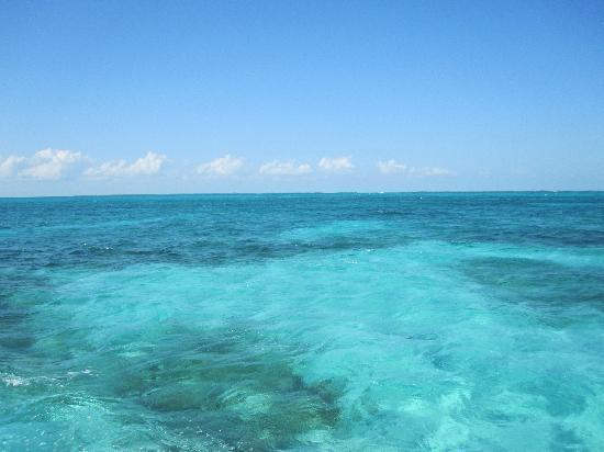 Blue Tang Inn: Clear blue water